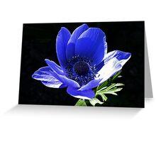 Blue Anemone Greeting Card