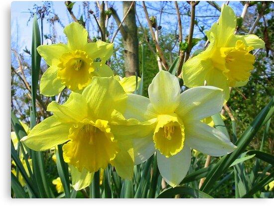 Happy Spring by ienemien