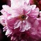 Blossom by Mike Topley