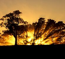 ~ Ablaze ~ by LeeoPhotography