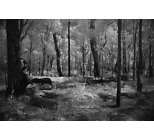 Bungendoore Forest Photographic Print