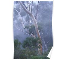 A Foggy Blue Mountains (NSW) Morning Poster