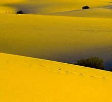 """I left my 'HEART' in Death Valley"" Multiple Tree shots by franciscokh"