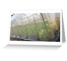 Hydroponic Vegetables Greeting Card