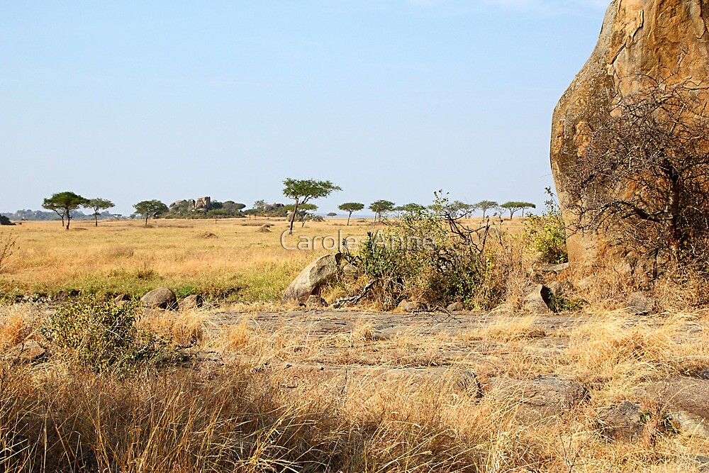 Rock Formations, Kopjes in Serengeti National Park, Tanzania by Carole-Anne