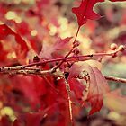 Autumn Colours by yolanda