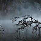 Foggy Mudgee Creek by Dufflebag