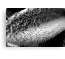 Furry Leaf Canvas Print
