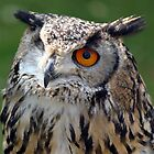 One eyed Eagle Owl  by larry flewers