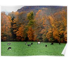 Cows and Foliage Poster