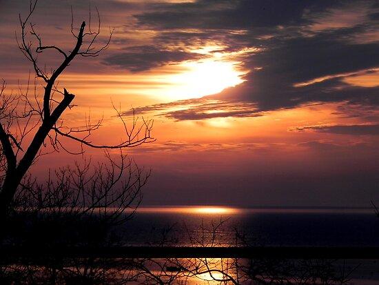 Early Morn ©  by Dawn M. Becker