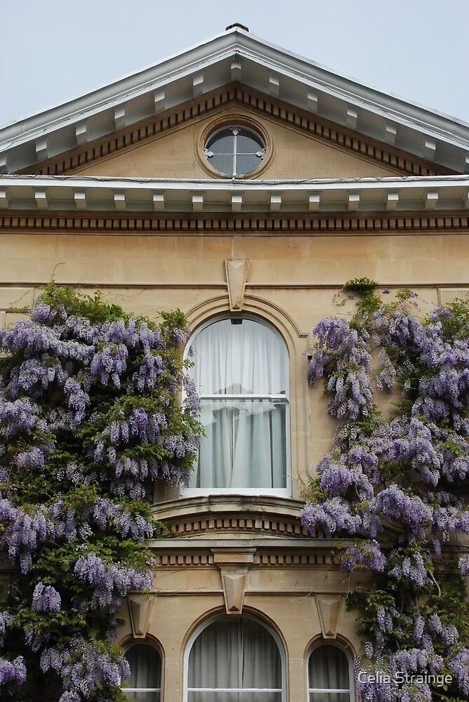 Wisteria Window by Celia Strainge