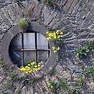 Round Window by villrot