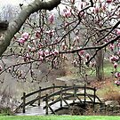 Rainy Day Magnolias by Monnie Ryan