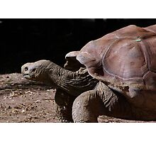 Slow and Steady Wins the Race Photographic Print