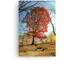 Red Autumn Tree Canvas Print