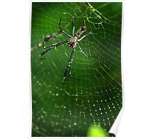 Golden Silk Orb-weaver (Nephila sp.) - Bolivia Poster