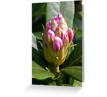 White Rhododendron Bud Greeting Card