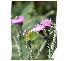 Yellow green Butterfly Poster