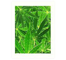 hemp leaf collage Art Print
