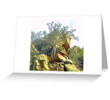Ficus Thonningii  ~  Strangler Fig  ~  Wurgvy Greeting Card