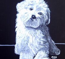 Call  me Madam   BICHON FRISE PUPPY by james thomas richardson