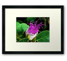 The Caper Flower Framed Print