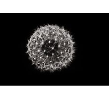 dandelion- Make a wish Photographic Print