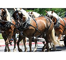 Pulling Together ~ Horses Hitched to a Wagon Photographic Print