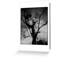 In The Black Forest Greeting Card