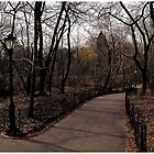 Central Park Panoramic by steeber