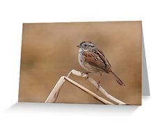 Easter morning Swamp Sparrow. Greeting Card