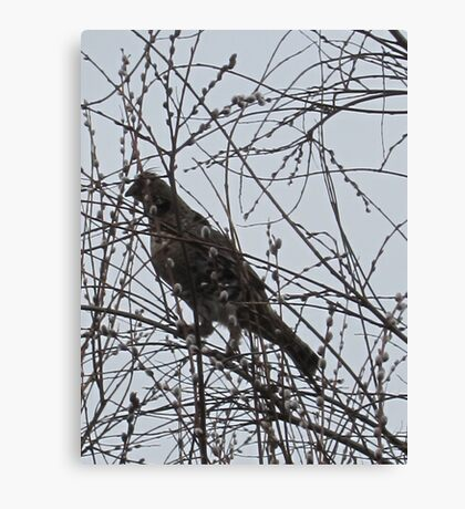 Partridge in a Pussywillow Tree Canvas Print