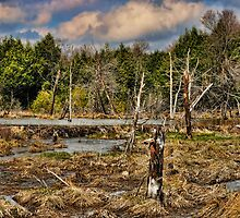 Beaver Dam by Gaby Swanson  Photography