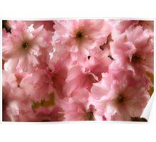 Cherry Blossom Spring Poster