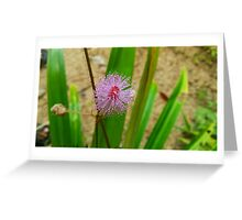 Sensitive Flower Greeting Card