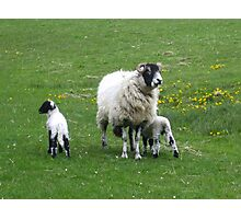 Who Ewe Looking At!!! Photographic Print