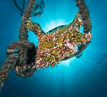 The Frogfish in the rope by Gorden