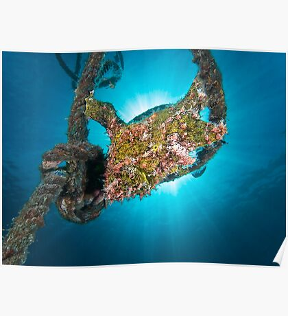 The Frogfish in the rope Poster