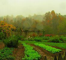 Garden at Bethabara by DaveMoffatt