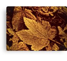 Autumn Warmth  Canvas Print