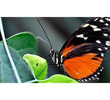 Butterfly wonder Photographic Print