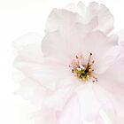 Spring Awakening #3 by Ronny Falkenstein