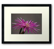 Flower 4877 Framed Print