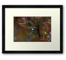 Drop 4634 Framed Print