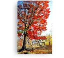 Little Red Tree, Central Park Canvas Print