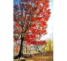 Little Red Tree, Central Park Photographic Print
