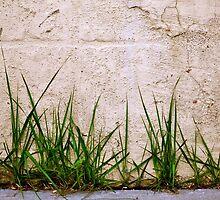 Sidewalk Grass by KNPhoto