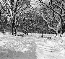 Winter Wonderland, Central Park by Alberto  DeJesus