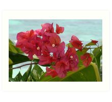 Bougainvillea with Ocean Background Art Print